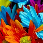 florist blog