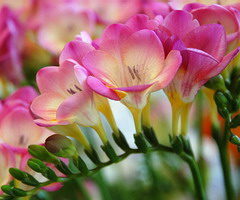 best flowers for spring weddings
