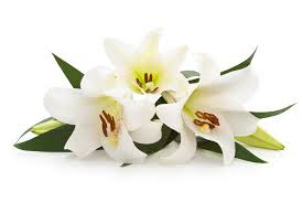 Image result for funeral lilies