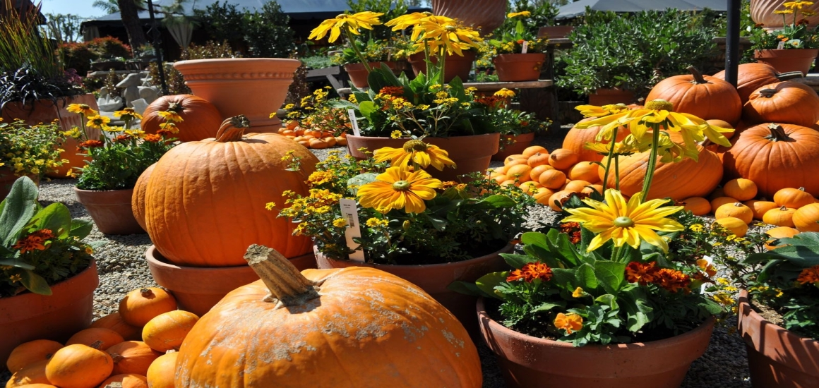 6 Halloween Decorating Tips with Fall Flowers