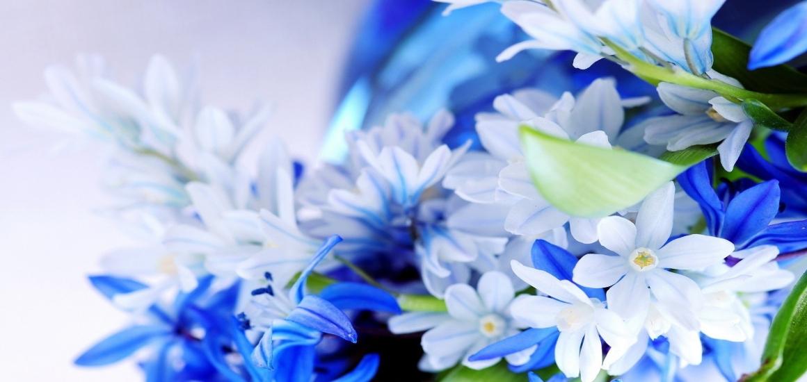 Toms River Florist Provides Perfect Flower Decorations to Celebrate Hanukkah