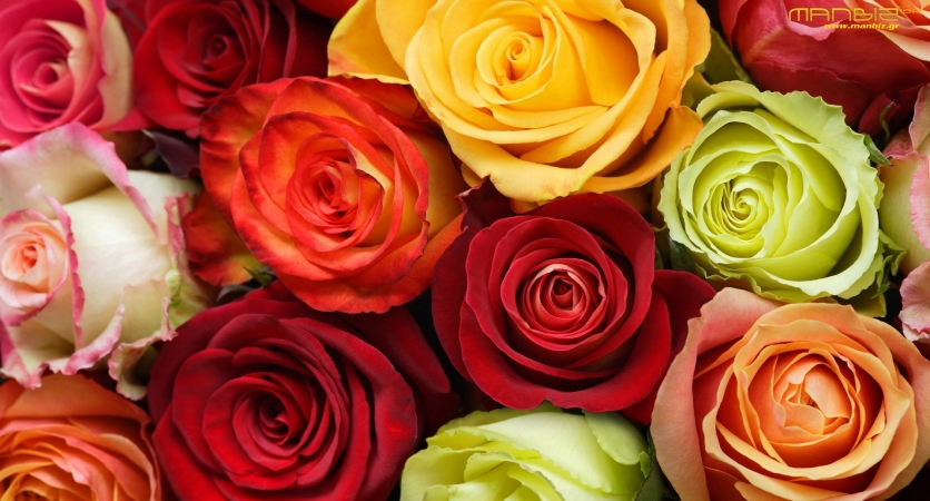 The Meaning Behind Valentine's Day Roses